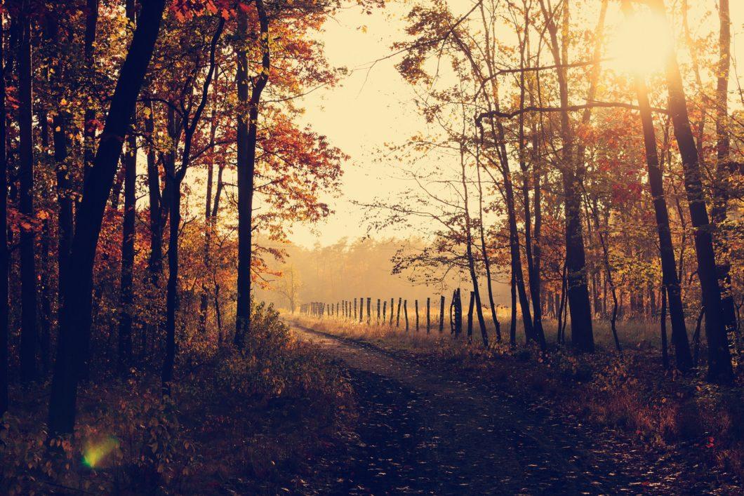 automne rhume