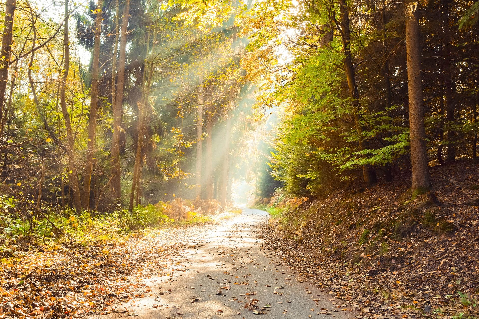 Quel temps d'exposition au soleil faut-il pour synthétiser la vitamine D ?