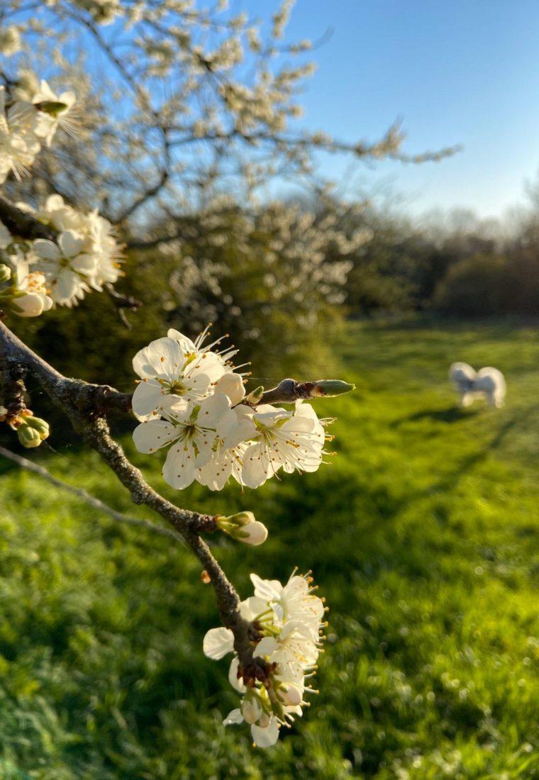 #1 ITV d'expert : les conseils 100% naturels à mettre en pratique pour mieux vivre le printemps !